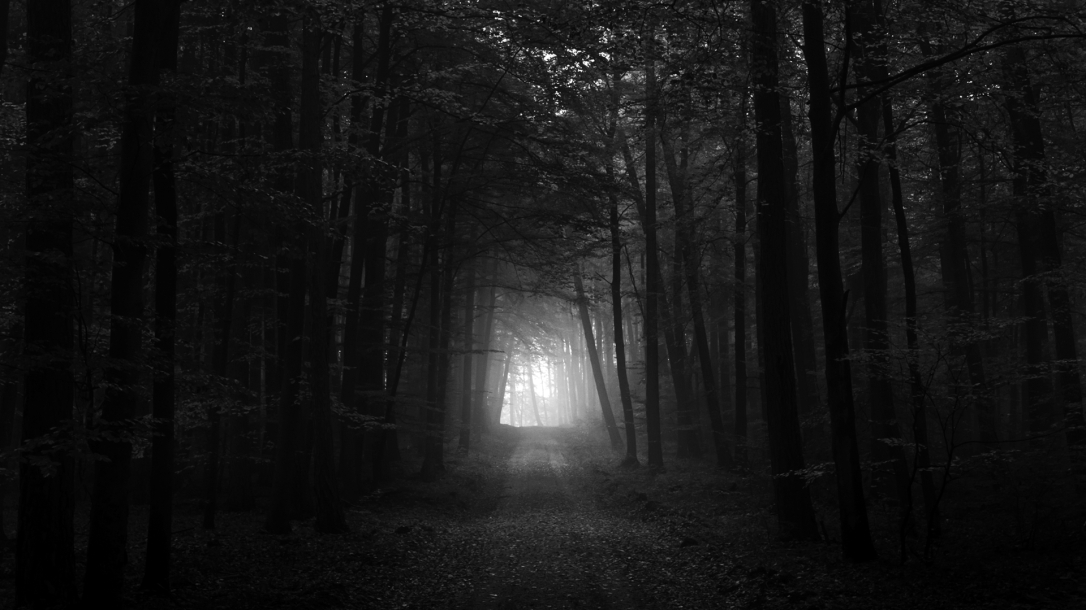40667_forest_black-white_black_and_white_dark_forest